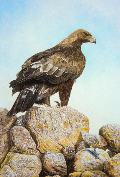 Golden Eagle, andesite