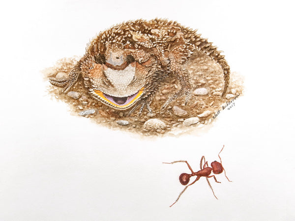 Horned Lizard and ant