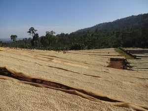 Ethiopia's Coffee Growing Regions & Coffee Profiles