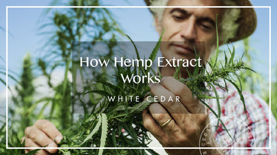 How Hemp Oil Extract Works