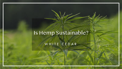 Is Hemp Sustainable?