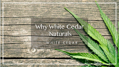 Why White Cedar Hemp Oil