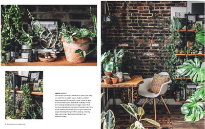 Wild Interiors - Beautiful Plants in Beautiful Spaces