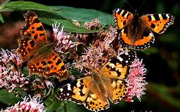 Butterfly Rearing Kit Order not available until Spring 2021