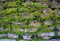 overgrowth mossy stone living wall wallpaper mural