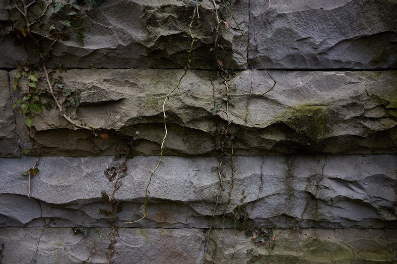 overgrowth living wall stone wallpaper mural