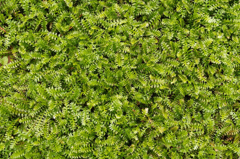 overgrowth fern leaf living wall wallpaper mural