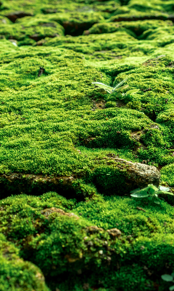 Mossy Surface M9298