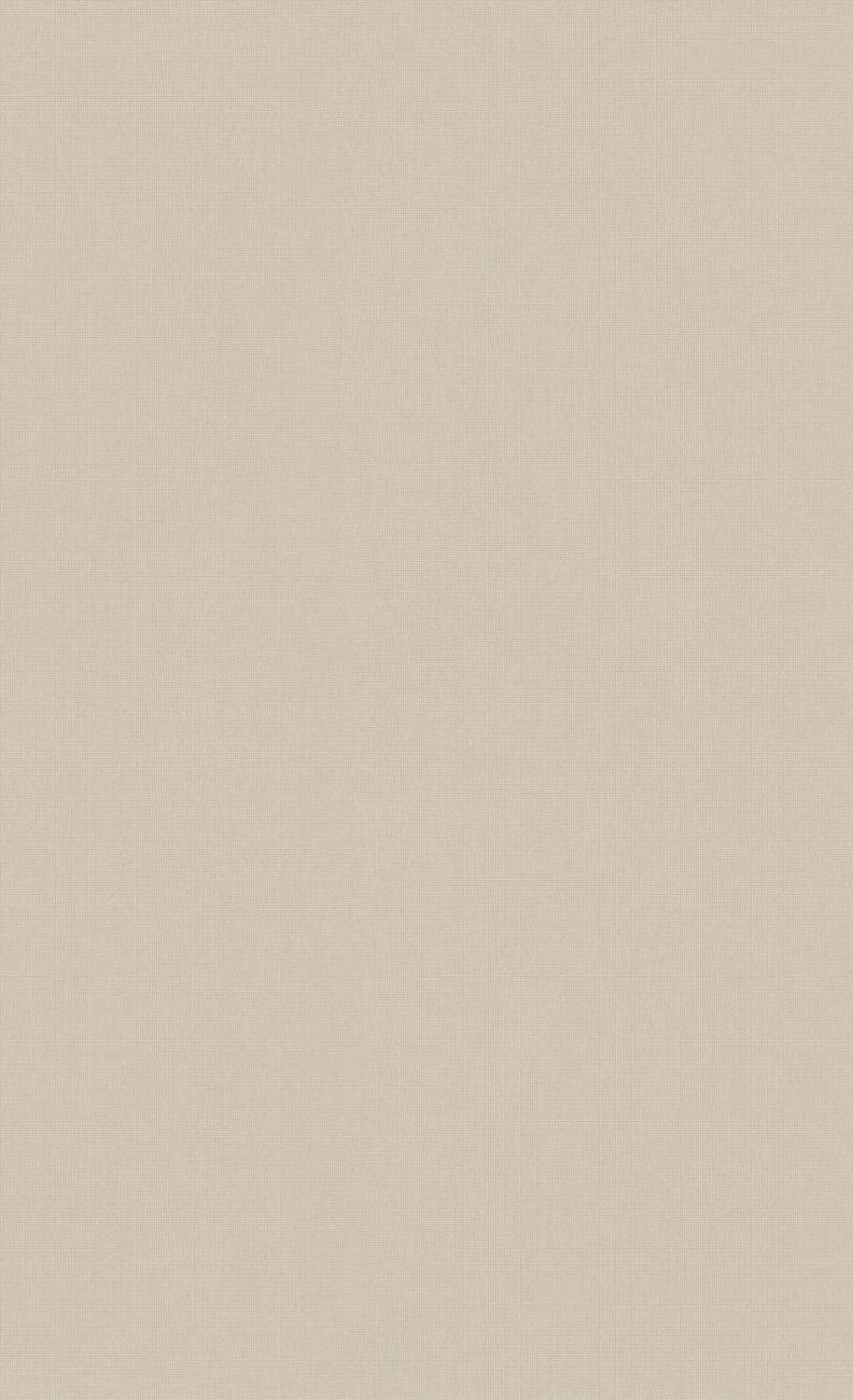Ash Gray Minimalist Wallpaper C7276 | Commercial and Hospitality