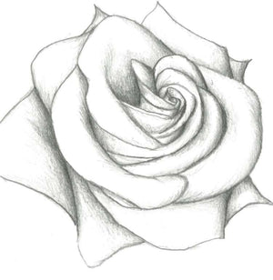 Rose   By Stevie