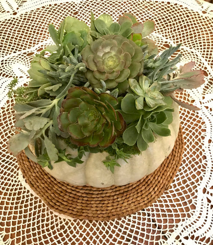 White Sage Green Large Pumpkin with Succulent Arrangment