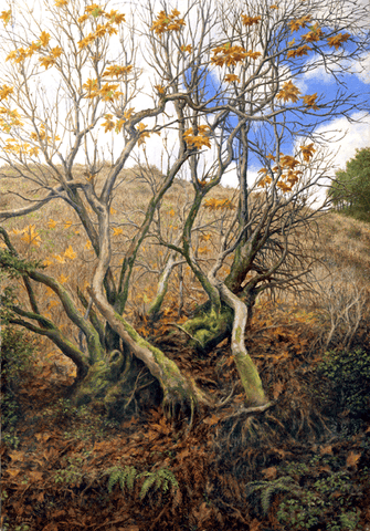 Card-Last Days of Fall-by Edmund Moody-Wholesale