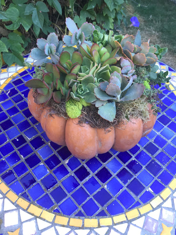 Medium Cinderella Pumpkin with Succulent Arrangment