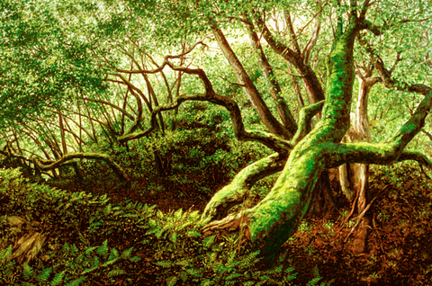 Oaks and Ferns - Giclée on Canvas