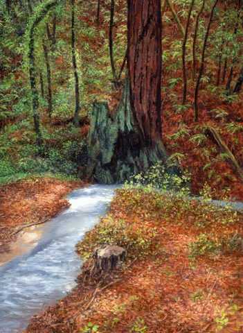 Redwood With Stream - Giclée on Canvas