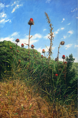 Thistles- Giclée on Canvas