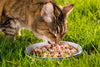Is Grain Free Cat Food Reliable?