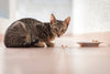 Why The Best Light Cat Food May Not Always Be Suitable For Your Cat?