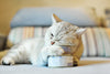 How safe is grain-free cat food?
