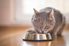 Benefits of Healthy Cat Food