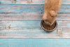 5 Common Mistakes Made in Preparing All-Natural Cat Food