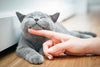 How Does All-Natural Cat Food Benefit Your Cat?