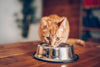 4 Essential Tips on Choosing the Best Kitten Wet Food