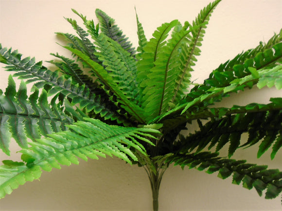 Boston Fern Bush 29