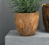 Tree Root Pots - Little Road Interior Design