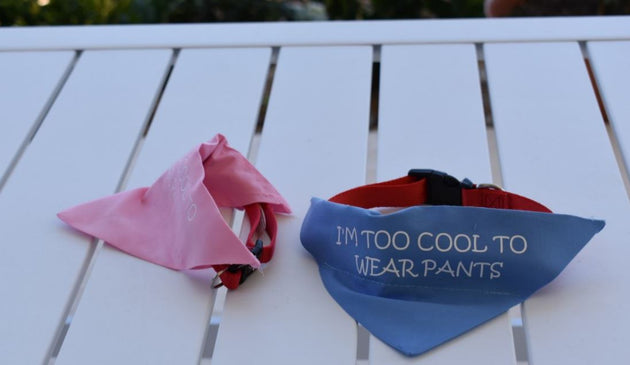 Pet Bandana - Too Cool for Pants