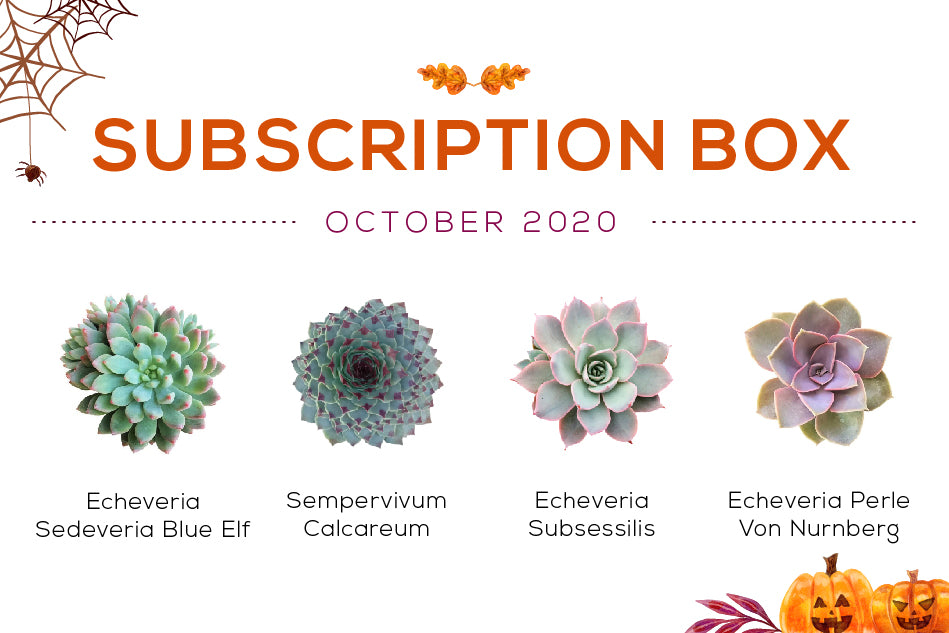 October 2020 Succulent Subscription Box Care Guide