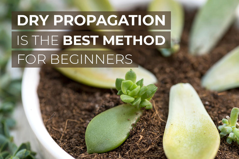 Why dry propagation is the best method for beginners