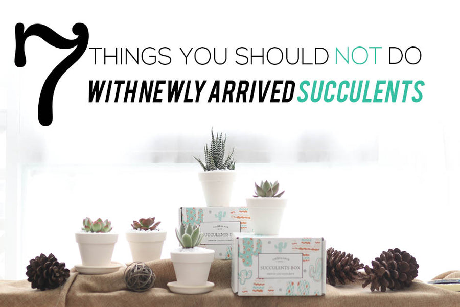 7 things you should NOT do with newly arrived succulents