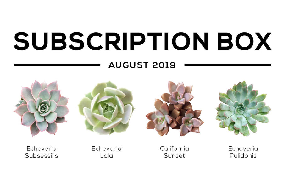 Succulents Box August 2019 Care Guide