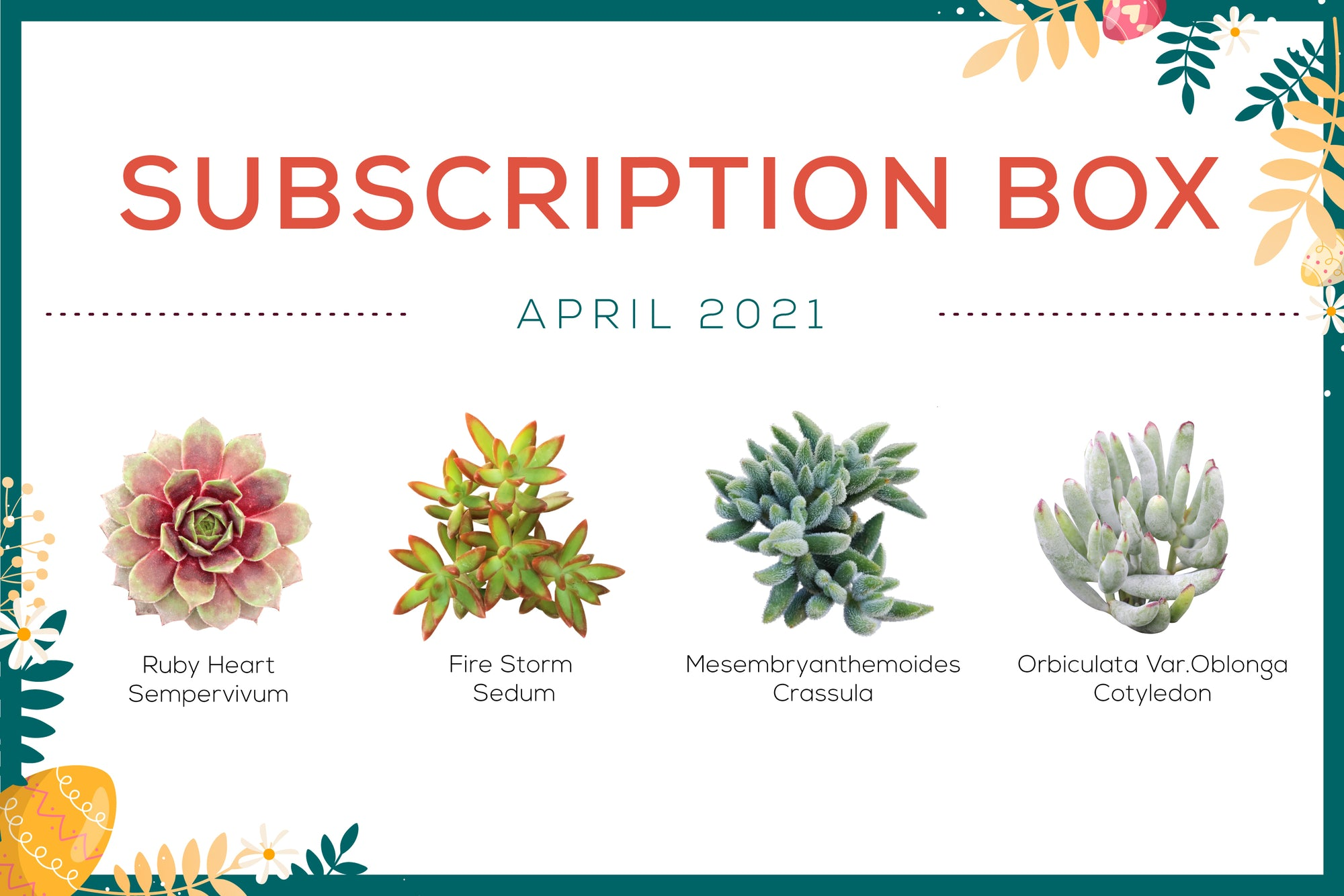 April 2021 succulent subscription box with care guide