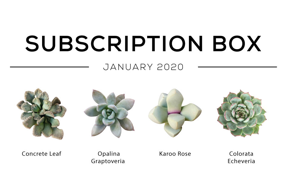 January Subscription Box Care Guide, Succulent Subscription Box, Succulent Gift Box, Gift for her, Gift for him, Succulent subscription box monthly