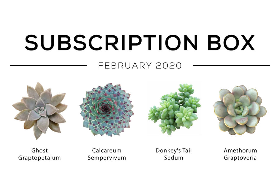 February 2020 Subscription Box Care Guide