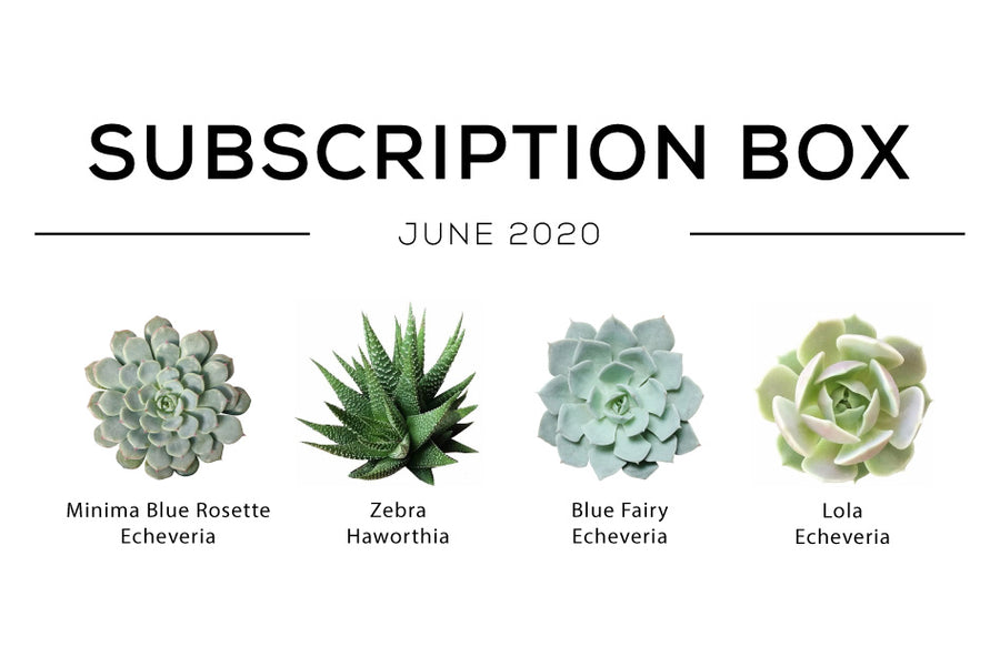 Succulent Boxs June Subscription Box 2020