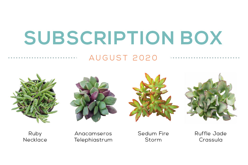 August 2020 Succulent Subscription Box Care Guide