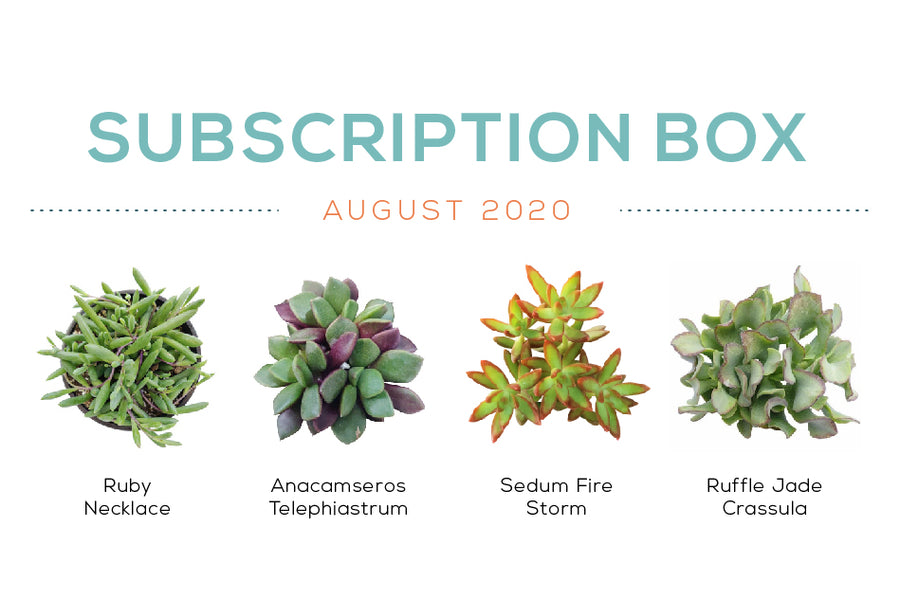Succulents Box August Subscription Box 2020