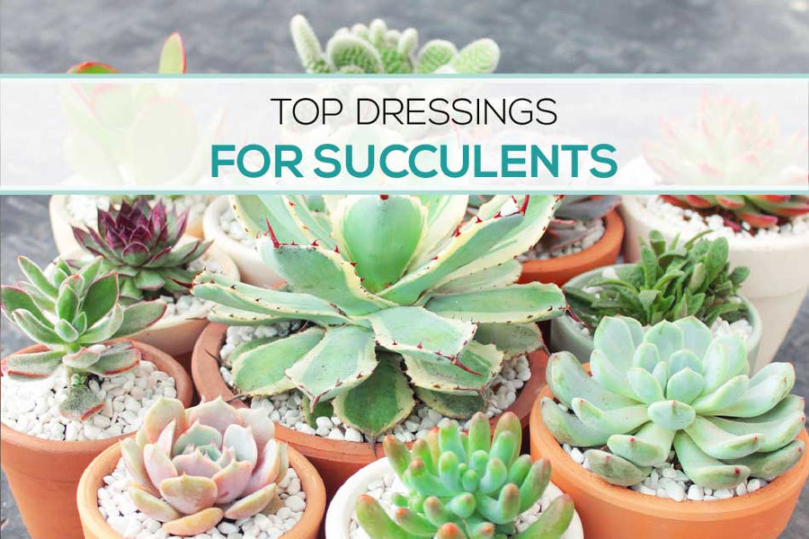 Topdressing for succulents