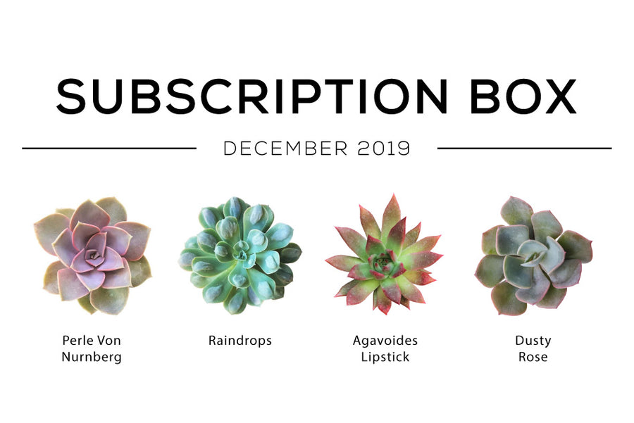 Succulents Subscription Box December 2019, Succulents Subscription Box delivered monthly