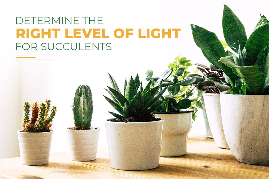 Demystify natural light for succulents