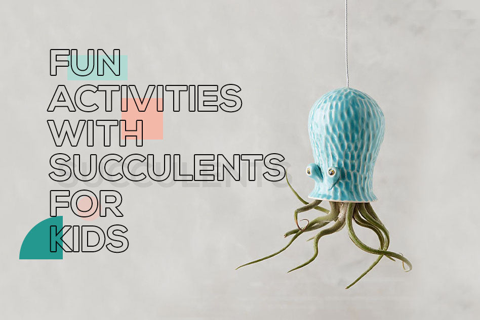 Fun activities with succulents for kids