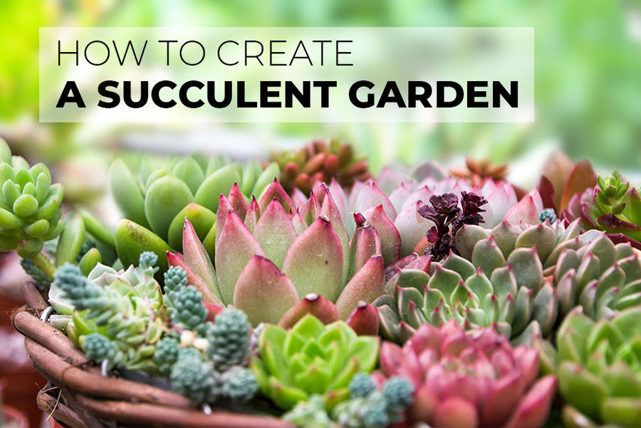How to create a succulent garden, How to Plant Beautiful Succulent Gardens, Learning to make a succulent garden