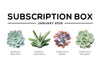Succulents Box January 2019 Care Guide