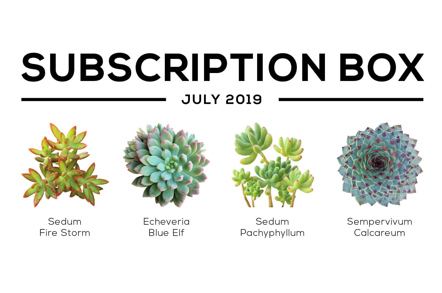 Succulents Box July 2019 Care Guide