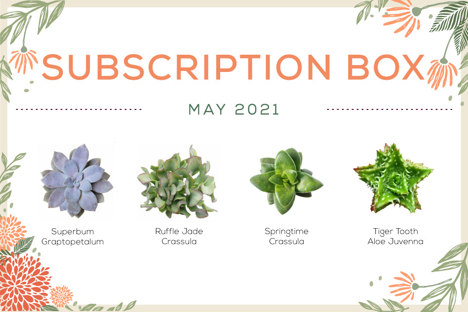 May 2021 Succulent Subscription Box Care Guide