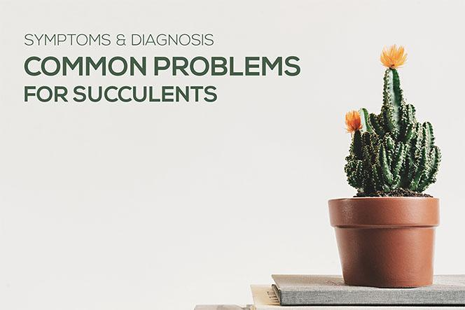 Common Problems for Succulents