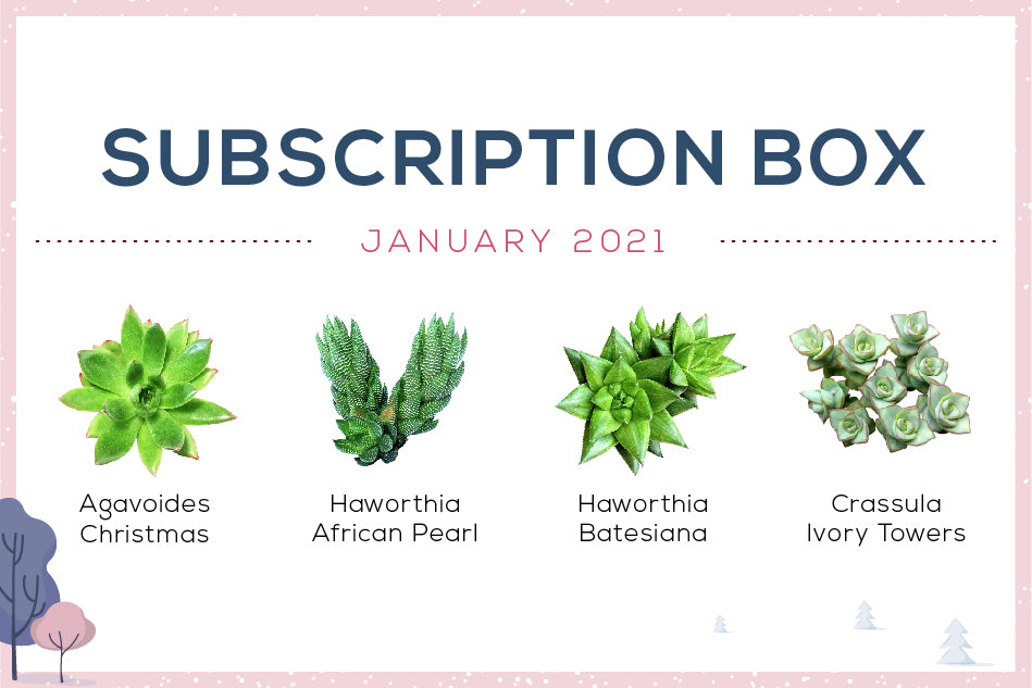 January 2021 Succulent Subscription Box Care Guide